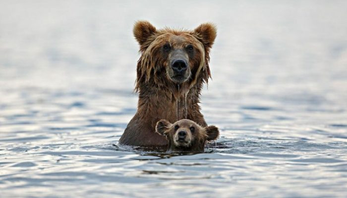 30 stunning photos of parenting in the wild